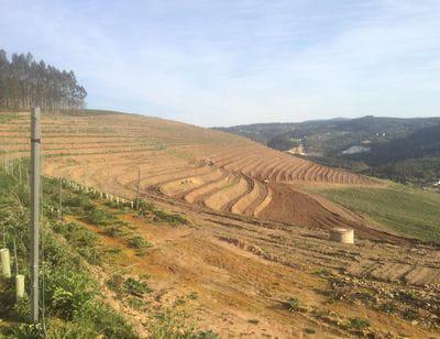 Mejora de productividad de fincas y platación vitivinícola en Donas - Vedra
