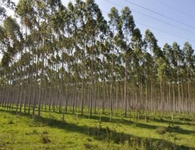 Arines amplía su división forestal